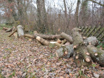 Liegendes Totholz im Bienenpark.