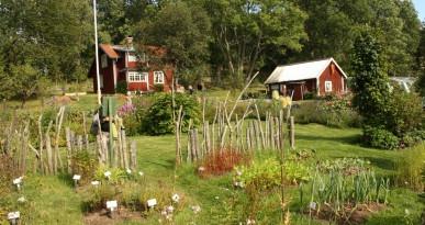 Holzhäuser im grünen Garten in Schweden. Foto: Kerstin Weidner