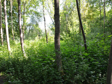 """Der Wald ist wie ein Haus in verschiedene """"Stockwerke"""" gegliedert."""