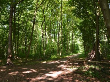 Funktionen des Waldes
