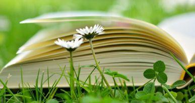 Buch auf Blumenwiese. Copyright: pixabay/congerdesign