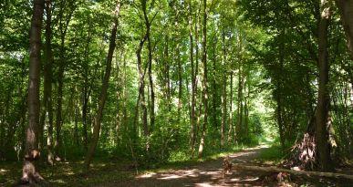 Der Hörpfad im Lohwald erzählt spannende Geschichten rund um den Wald.