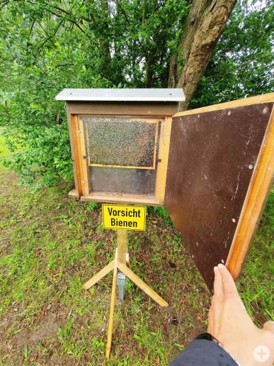 Im Bienenpark kann man jetzt die ersten Bienen beobachten.